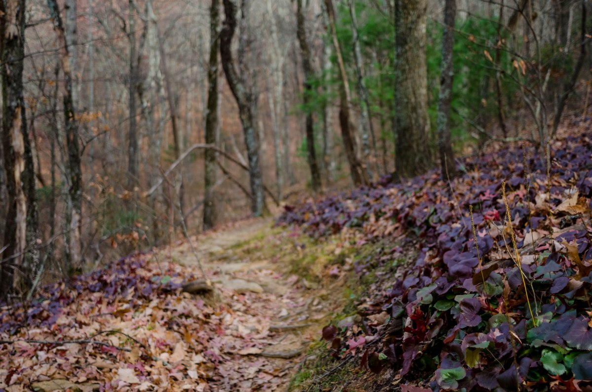 On the Trail: Introduction to DSLRPhotography
