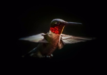jekyll island hummingbirdz (1 of 4)-2